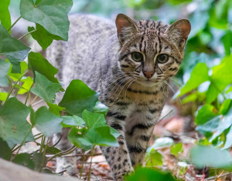 Geoffreys Cat