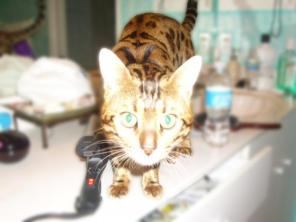 A Bengal Story
